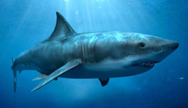 Фото - У рыб обнаружены гены, обеспечивающие их устойчивость к раку