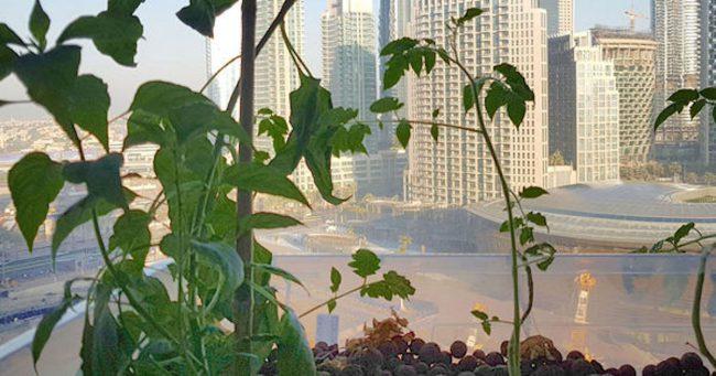 Фото - В Дубае появилась первая вертикальная ферма